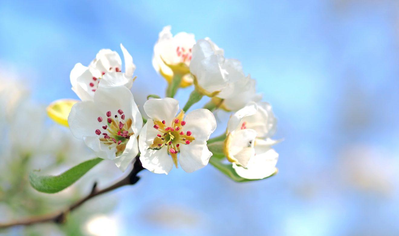 Frühlingsfreuden-Menü, 25. März 2020